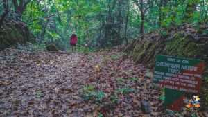 Rainy ride in deep forest to admire nature— Mhadei wild life sanctuary, Goa