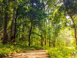 Dhoni-Falls-Palakkad-Kerala-Travel_Destination_Tripjodi