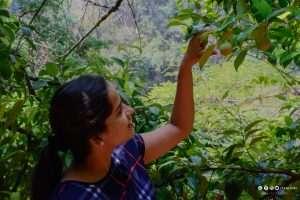 Kurumba Village resort by Nature Resorts Spice plantation tour Tripjodi